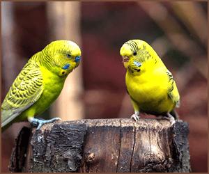 鳥類のブリーダーの一般的な業務