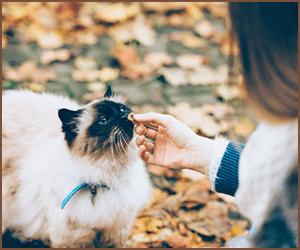 猫のブリーダーとして気をつけること