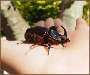 昆虫のブリーダーは難しい?