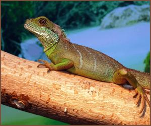 爬虫類のブリーダーになる方法